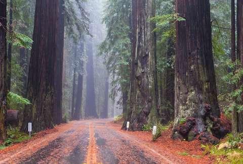 https://www.google.com/url?sa=i&source=images&cd=&cad=rja&uact=8&ved=2ahUKEwjTw9rasv7hAhWLbN4KHbVMBRwQjRx6BAgBEAU&url=https%3A%2F%2Fwww.thrillist.com%2Ftravel%2Fnation%2Fthe-most-beautiful-forests-in-the-worldψg=AOvVaw1Ebh5xcxScZs8v7ybdeMSl&ust=1556939713949560